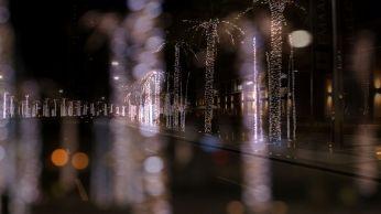 Dubai palm trees at night