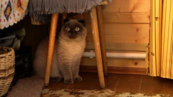 Moscow extraordinary cat