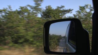 baobab mirror 2