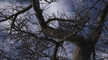 close up branches and sky